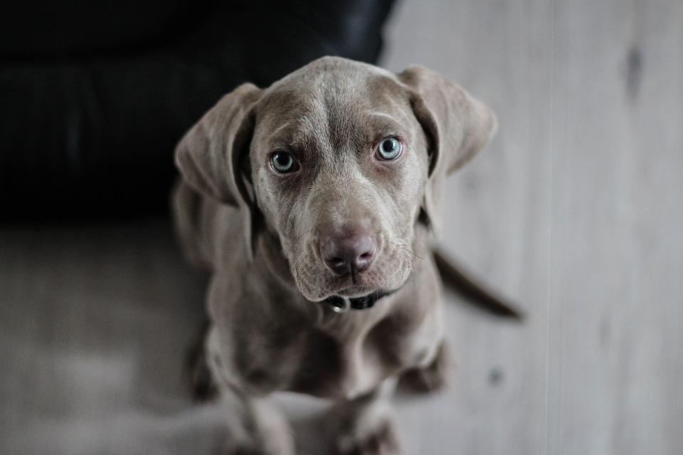 Perché assicurare un cane